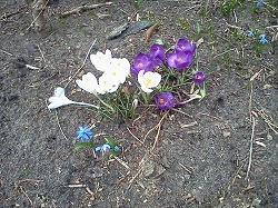 2 flower 1-2