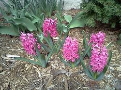 2 flower 6-1