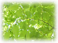 green120.jpg