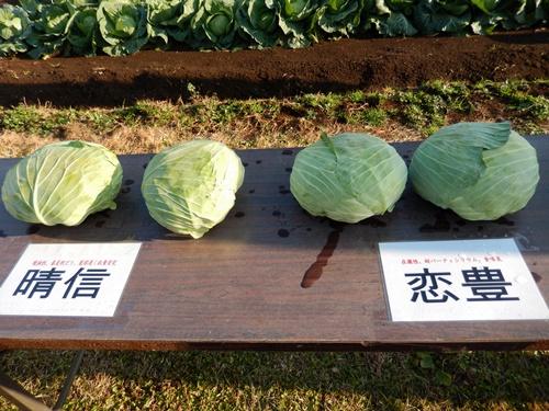 2013.11.26 秋のフィールドディ(千葉・雪印種苗) 029