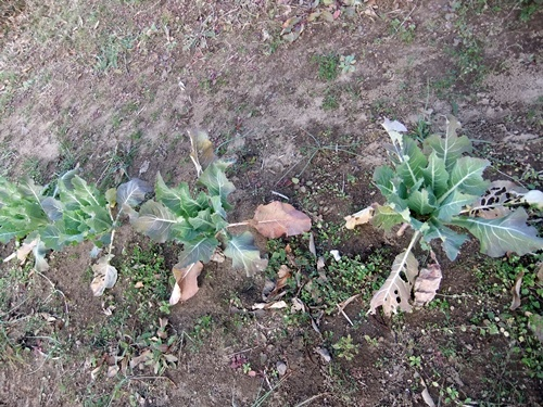 2013.12.15 ハウス野菜(育苗ハウス) 011 (14)