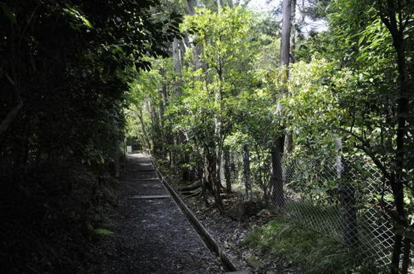 鎌倉寿福寺背面への道