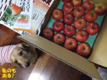 りんご、まさひろ農園2