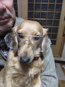 メガネ犬よ