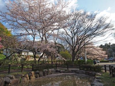 2013.4.8松ヶ岡公園1
