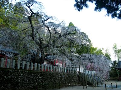 2013.4.8小川諏訪2