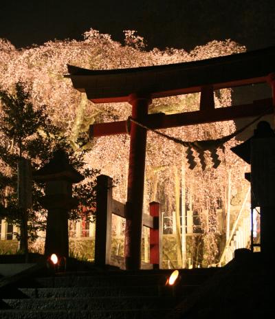 小川諏訪神社ライトアップ