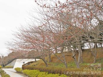 三崎公園2