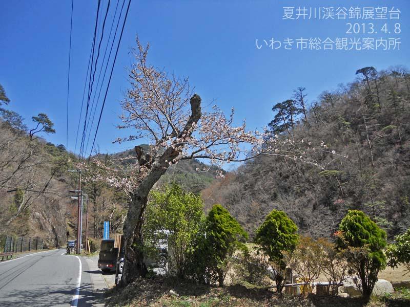 錦展望台5