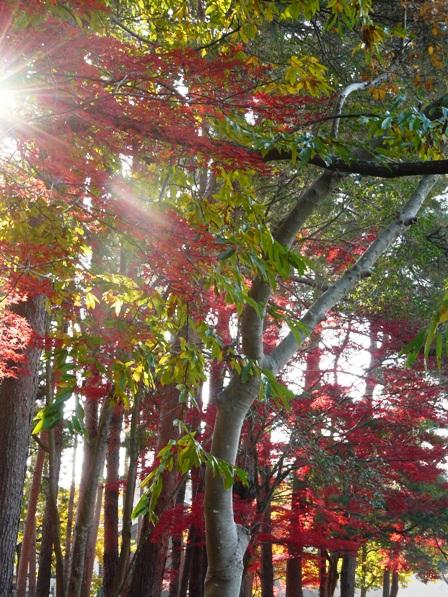 洞峰公園へ行く道の紅葉