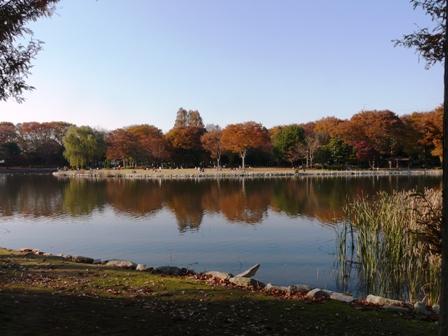 洞峰公園 紅葉 1