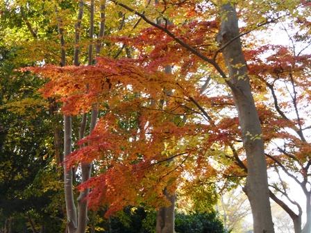 洞峰公園 紅葉 7
