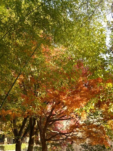 洞峰公園 紅葉 8