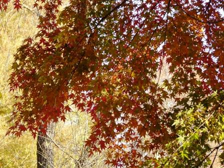 洞峰公園 紅葉 9