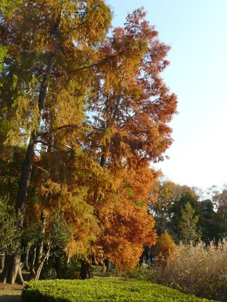 洞峰公園 紅葉 10