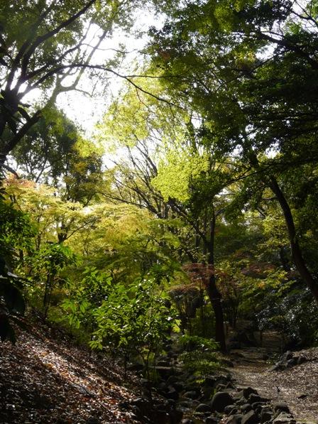 芝公園・もみじ谷 2