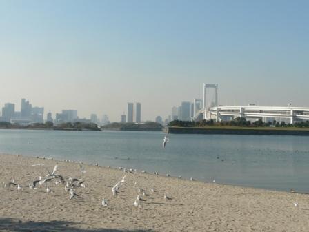 お台場海浜公園 ユリカモメ 3