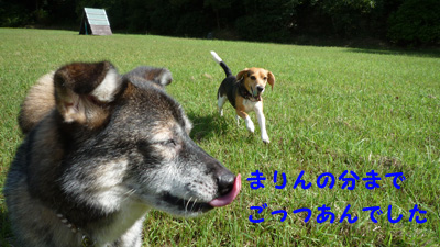 P1000784.jpg