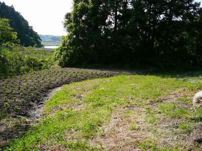 郭跡らしき畑