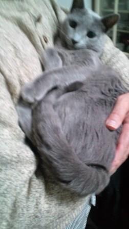 赤ちゃん毛皮を着た赤ちゃん