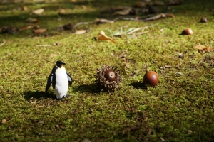 ペンギン どんぐり 01