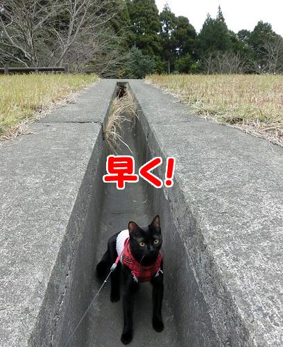 坂をのぼろうよ