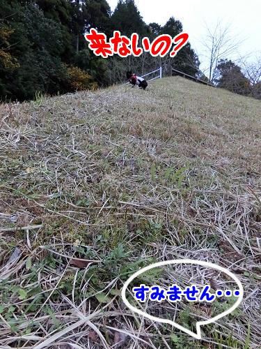 丘を登るジジ