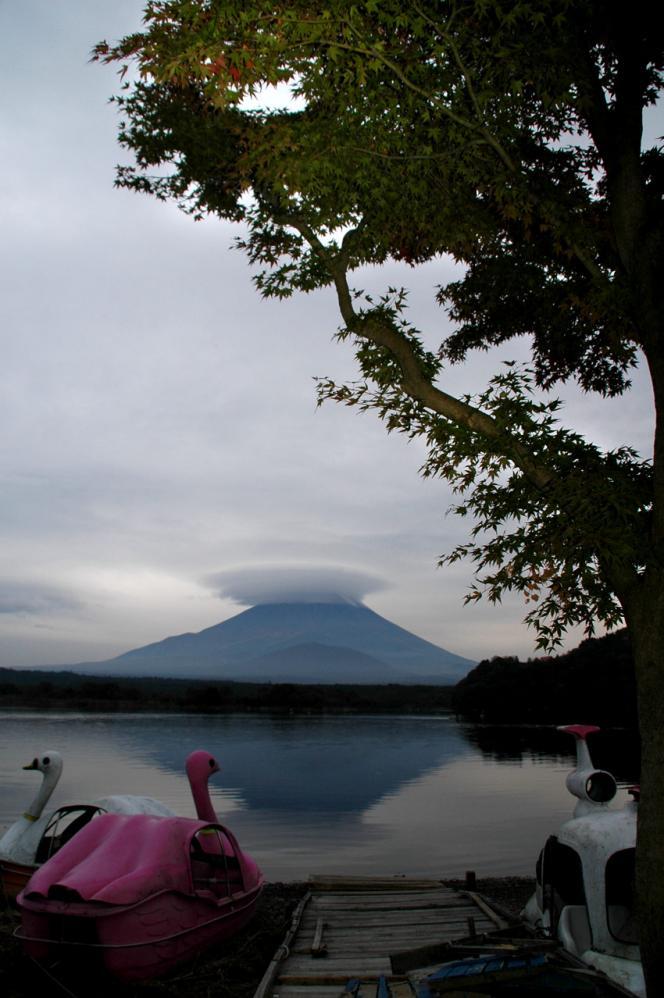 2011-10-30-アオイモミジ