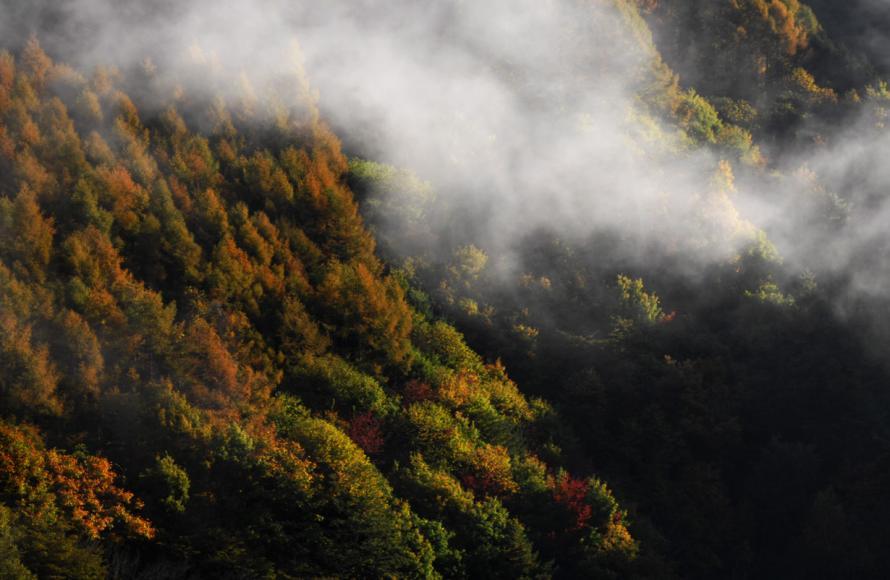 2011-10-31三富-(4)-ガス紅葉