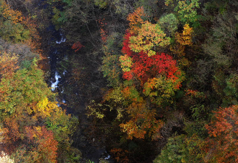 2011-10-31-赤い橋の上から@