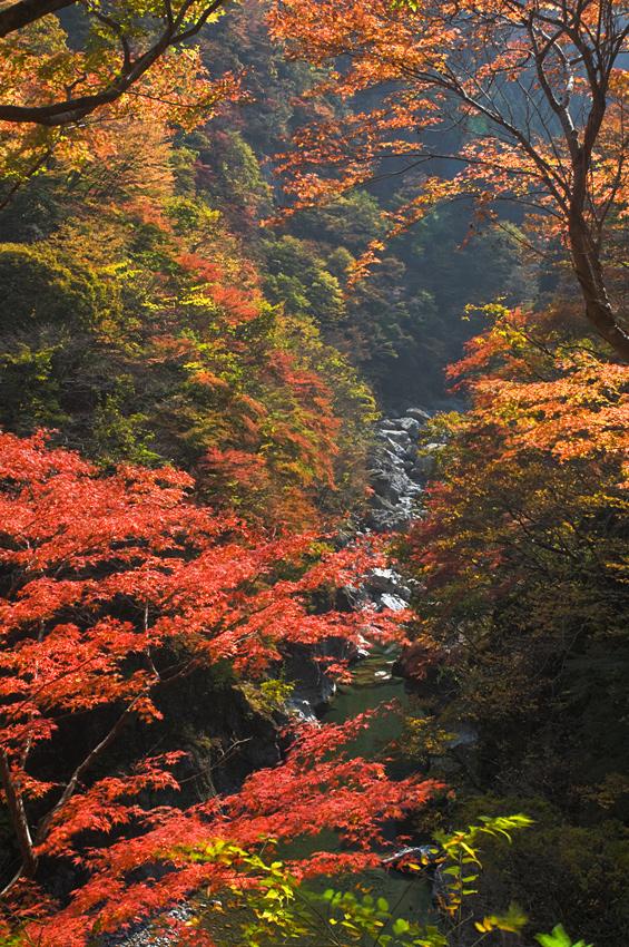2011-11-14-金蔵落-(133)_edi