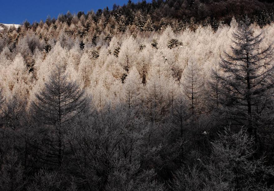 2012 01 29 樹雪(17)s