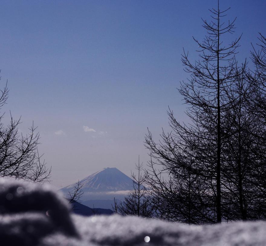 2012 01 29 光ある木(37)s