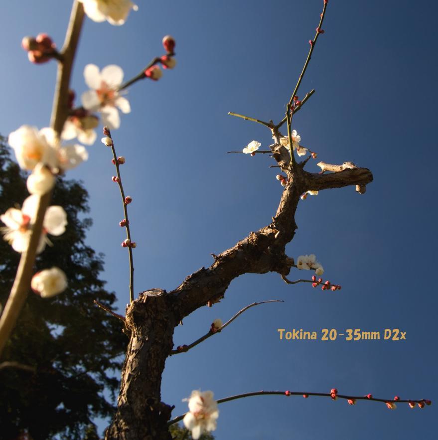 Tokina 梅 (13)s