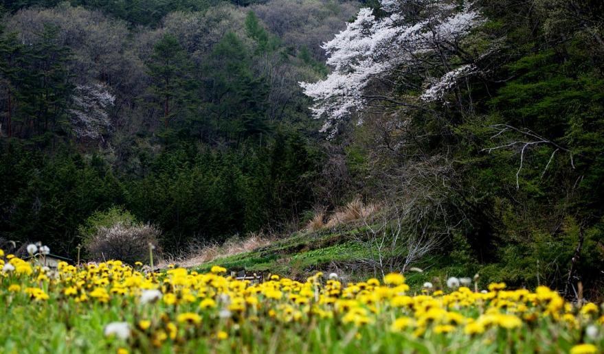 2012 04 30 @ 牧丘 (38)s