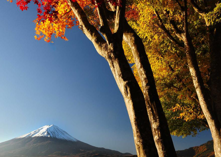 2012 11 10 *河口湖紅葉 (85)s