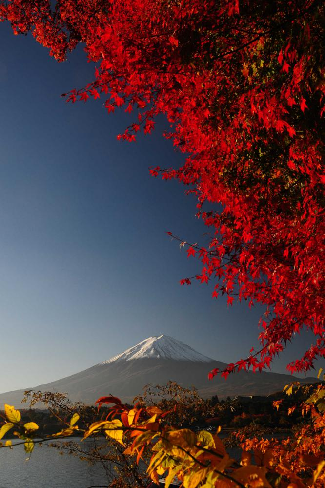 2012 11 10* 河口湖紅葉 (74)s