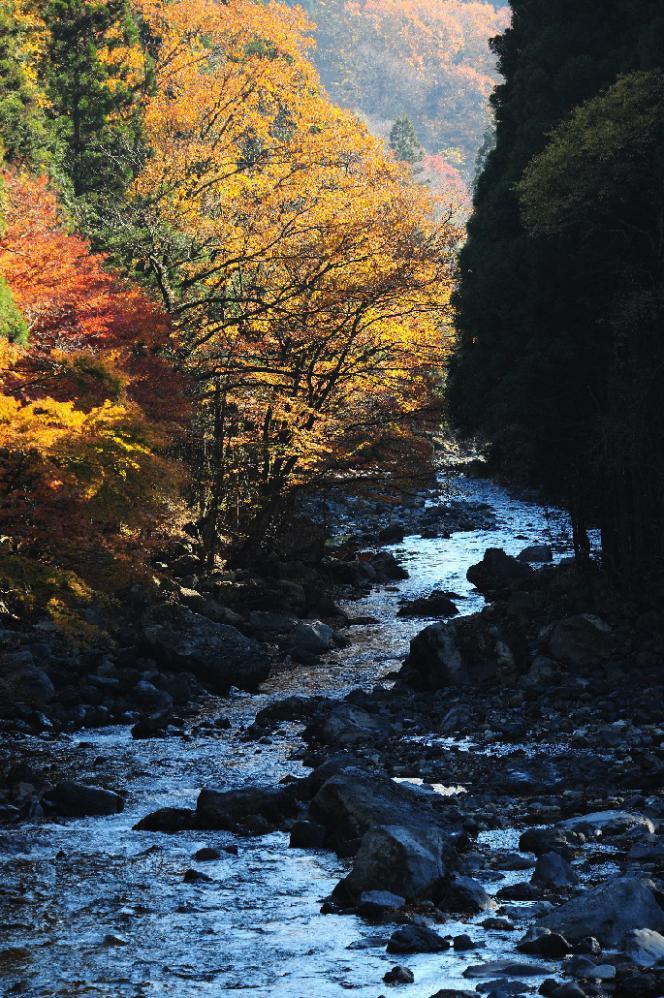 2012 11 25*タヌキ手前 D3x (72)