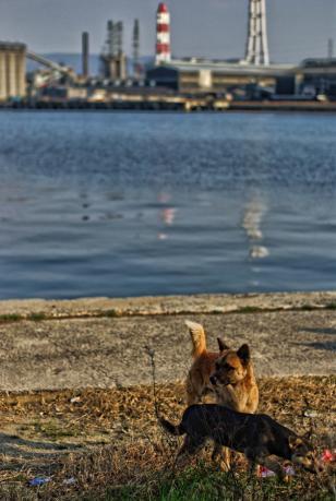 坂出_番の州工業地帯の野良犬