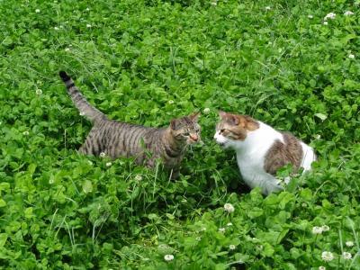 楓とオレガノ
