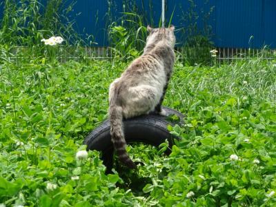 野良ネコ後ろ姿