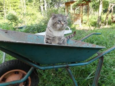 タンジーon一輪車