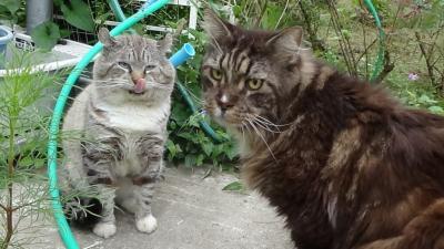 サクラ&タンジー
