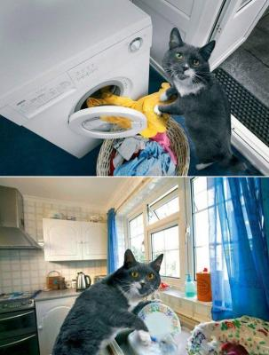catwife.jpg