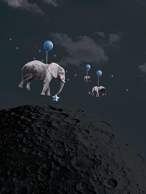 coll-starselephants-1.jpg