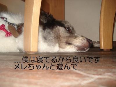 寝てるから