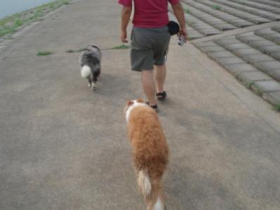 歩いて歩いて