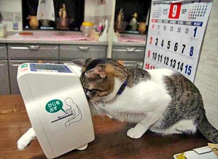 血圧を測るニャ!