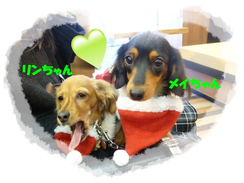 メイちゃん&リンちゃん