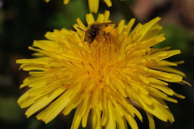 ミツバチ-01_069